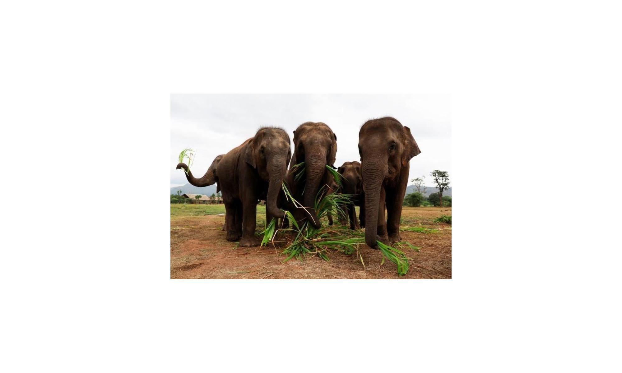 6 فيل فرين